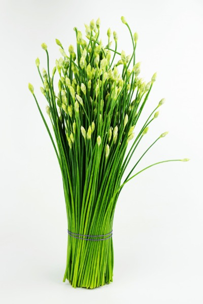 chinese-chives-flower-​(local-mart)